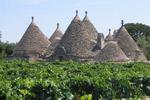 viticoltura trulli